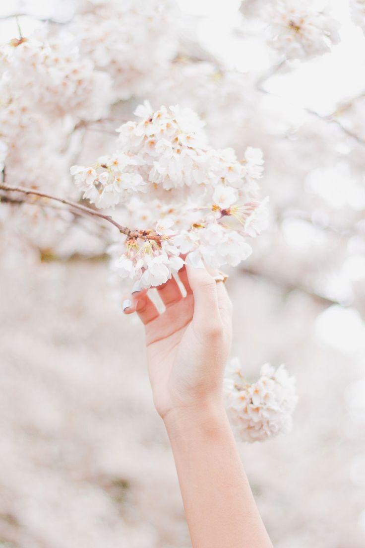 фото с цветущими деревьями руками желтый кленовый листья