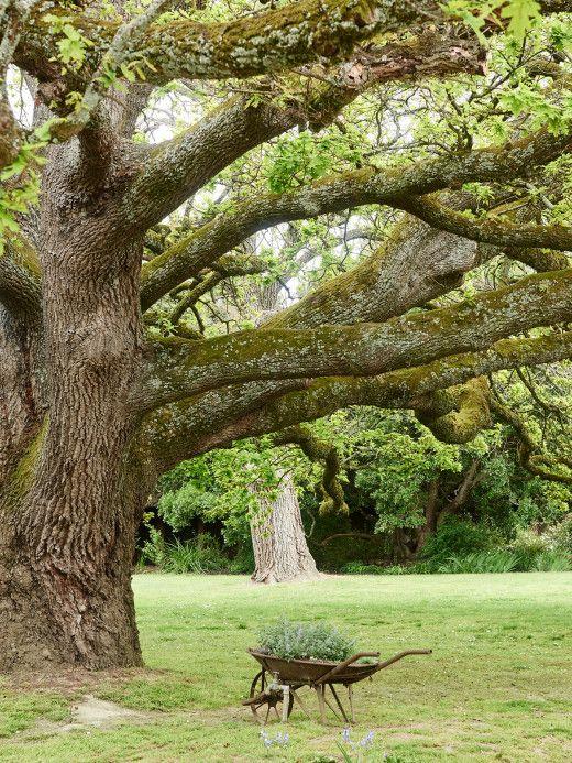 Coombe Estate · The Garden of Dame Nellie Melba