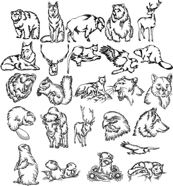 Best images about sketches on pinterest calligraphy