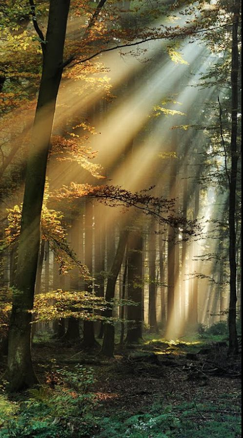 Light beams in the Eifel forest | crepuscular rays, Eifel National Park, western Germany | by Ingrid Lamour~~