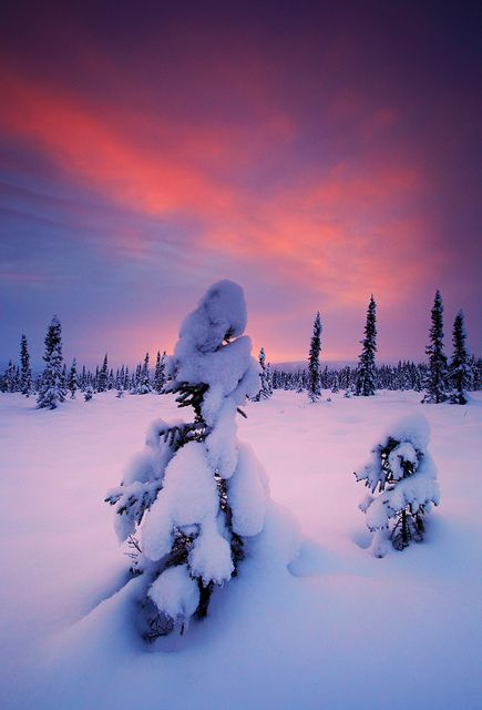 November Snow at Sunset in Alaska.  Go to www.YourTravelVideos.com or just click on photo for home videos and much more on sites like this.