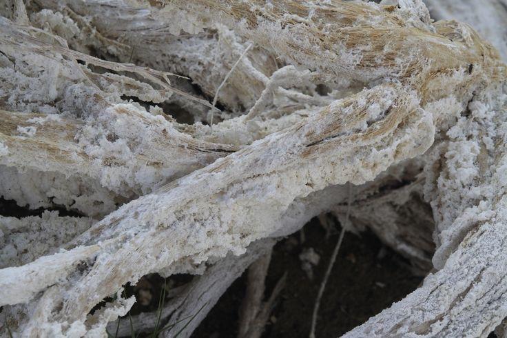 Dit is een foto van een boomstam die ik tegenkwam bij Monolake, het zoutste meer dat je vindt in de Verenigde staten. De boomstam wordt geheel bedekt door zout. Het is een gek gezicht: in het meer