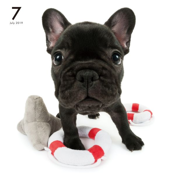 Artlist Collection The Dog French Bulldog Calendar Cute French