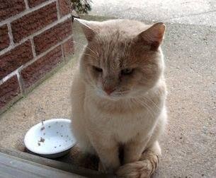 Χαθηκε μεγαλοσωμος γάτος, γυρω στα 7 κιλα , απο τον Άλιμο κοντα στα mini soccer (Βαλλιανου).