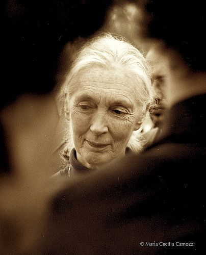 Jane Goodall.  Such a lovely photograph of a lovely woman.