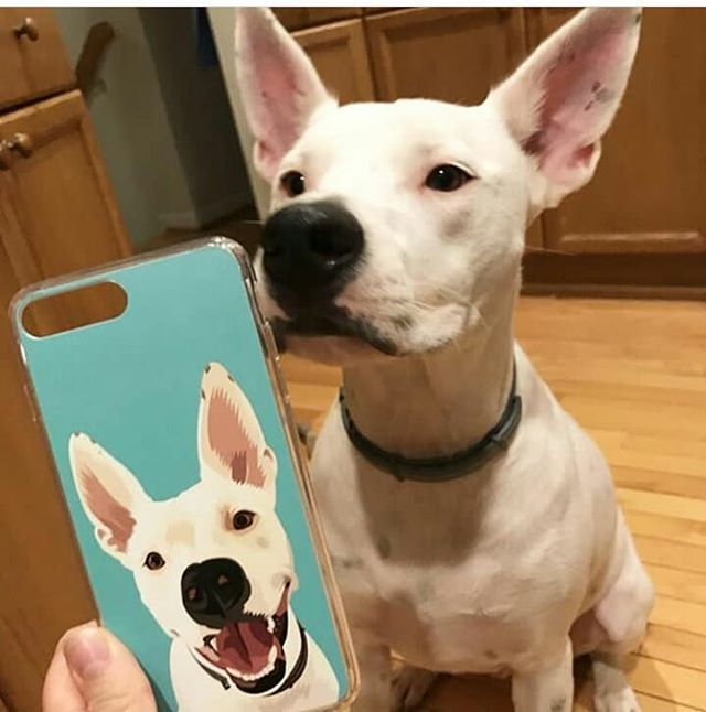 Looking For Your Favourite New Phone Case Petprintpaw Hase Coverd You Petlove Dogsofinstagram Dogs Dog Dogofinstagram Pets Puppy Lover Dog Friends