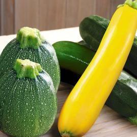 Veredelte Zucchini-Kollektion,3 Pflanzen