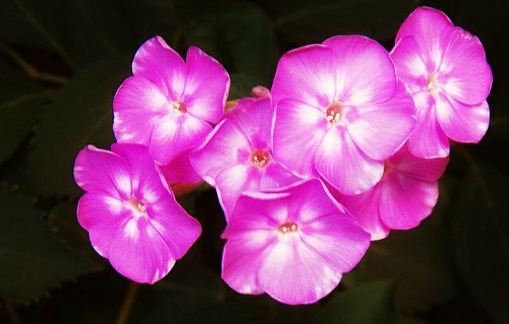 Little-Pink