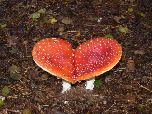 liefde der natuur