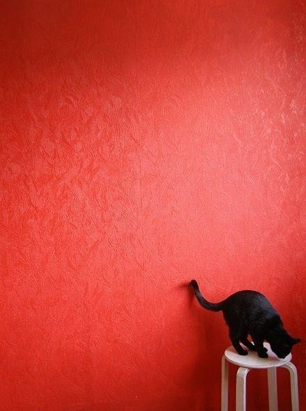 Black Kitty, Red Wall, Black And White, Shades Of Red, Red Room, Blood Orange, Black Wall, Black Cat, Red Black