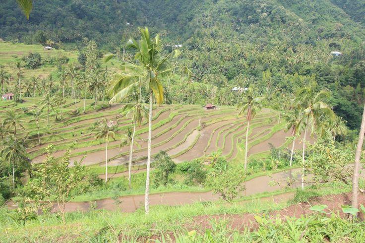 Rice terraces at the top of sekumpul waterfalls Bali