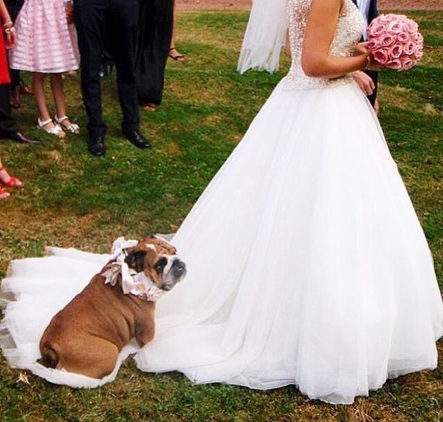 This will be my wedding