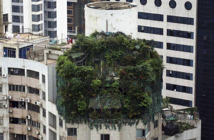 Un edificio abusivo coperto di piante a Guangzhou, in Cina