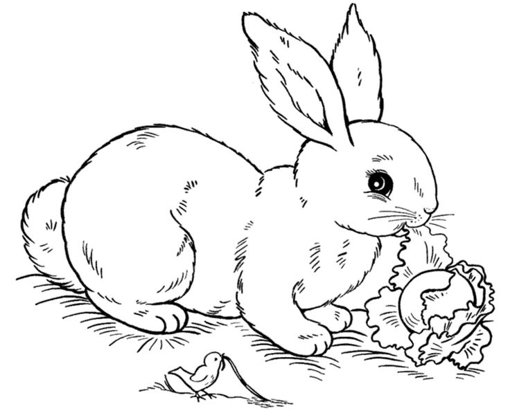 Free printable coloring pages of rabbits ~ 10 best images about 4 H Project for fair on Pinterest ...
