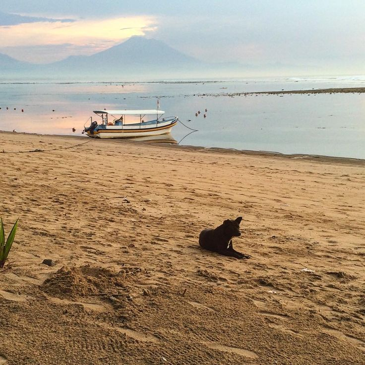 Oh bless my daughter!! I just went through the photos on her phone of our recent trip (she's 10, no breach of privacy I promise). Oh what treasures there are. Here is a fab shot she took, of the dog, but also the morning sky, jukung & Mt Agung!! #travelwithkids . . .