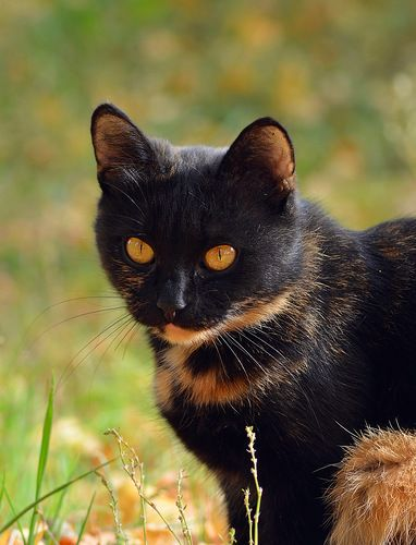 What beautiful color this cat has.. ♥
