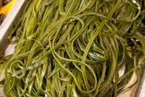 Польза и вред морской капусты / Будьте здоровы