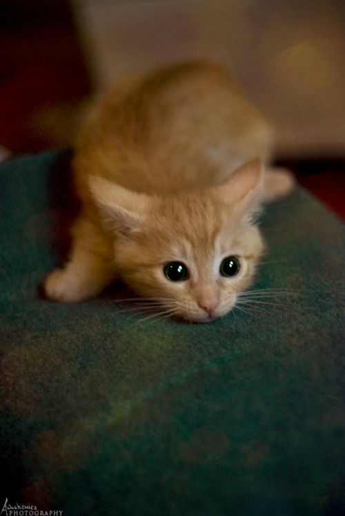 48 Kittens Giving You Kitty-Cat Eyes http://ceteron.blogspot.com.tr/2015/03/48-kittens-giving-you-kitty-cat-eyes.html