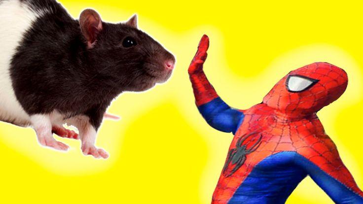 Человек Паук ПРОТИВ Крысы! Смешной Пранк с Ведьмой в Реальной Жизни