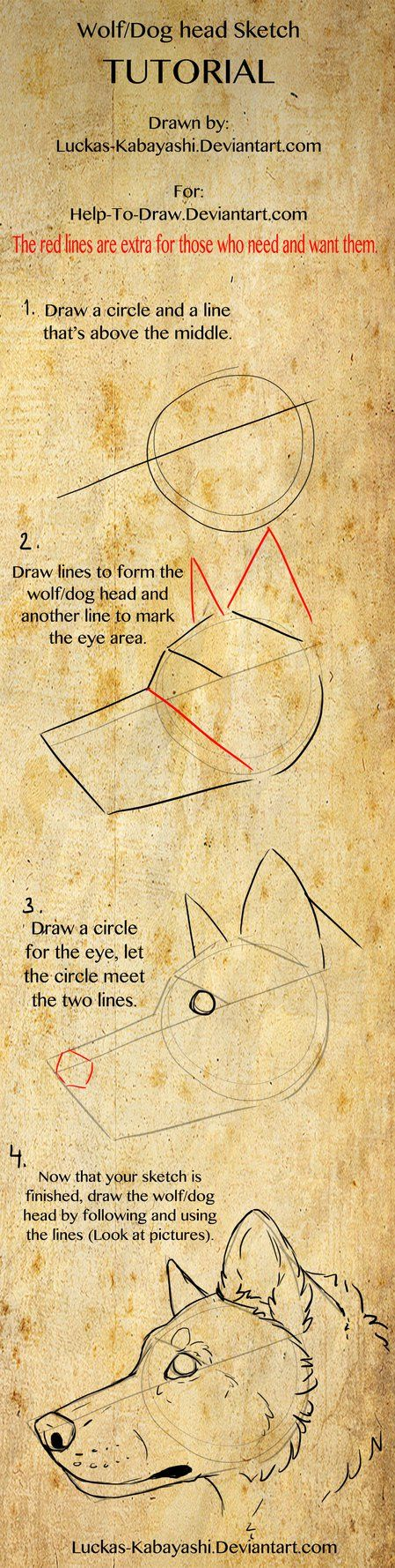 This is a way you can sketch you wolf/dog head, you can use more or less lines. Tutorial owned and made by: © Luckas-Kabayashi For more tutorials:luckas-kabayashi.deviantart.co…