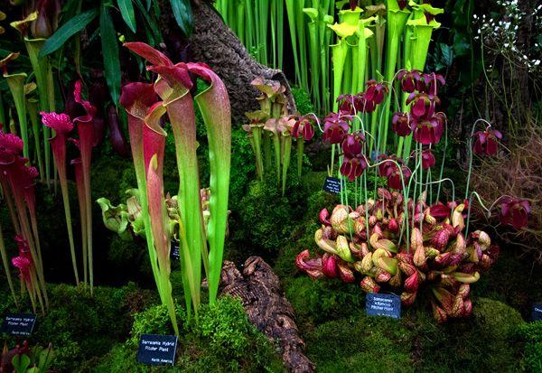carnivorous (prehistoric-looking!!) plants!