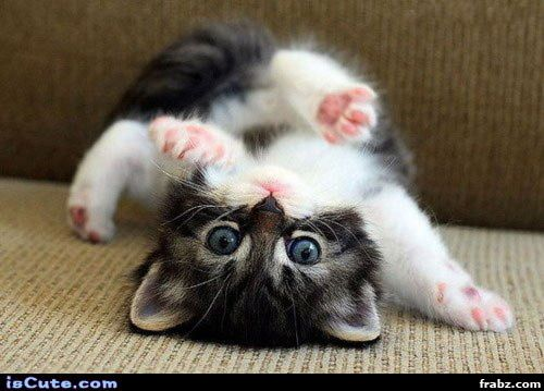 Somersault Kitten Meme Generator - Captionator Caption Generator ...