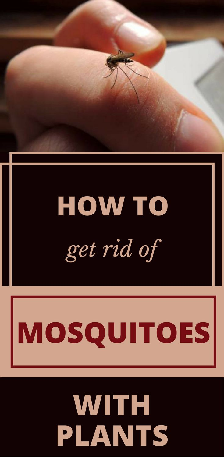 1000 best cleaning tips 101 images on pinterest how to Ways to get rid of mosquitoes in your house