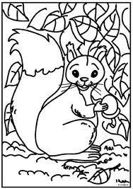 eekhoorn kleurplaat - Google zoeken