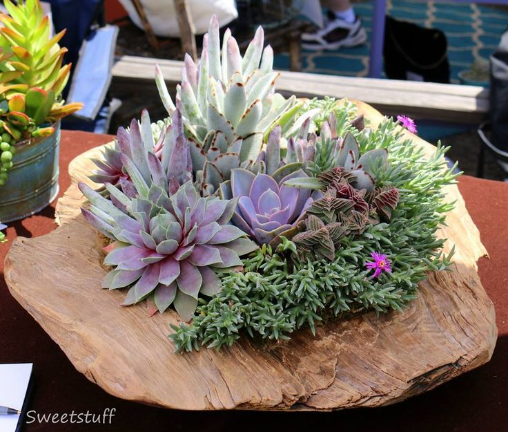 1618 Best Images About Sweetstuff's Succulents On