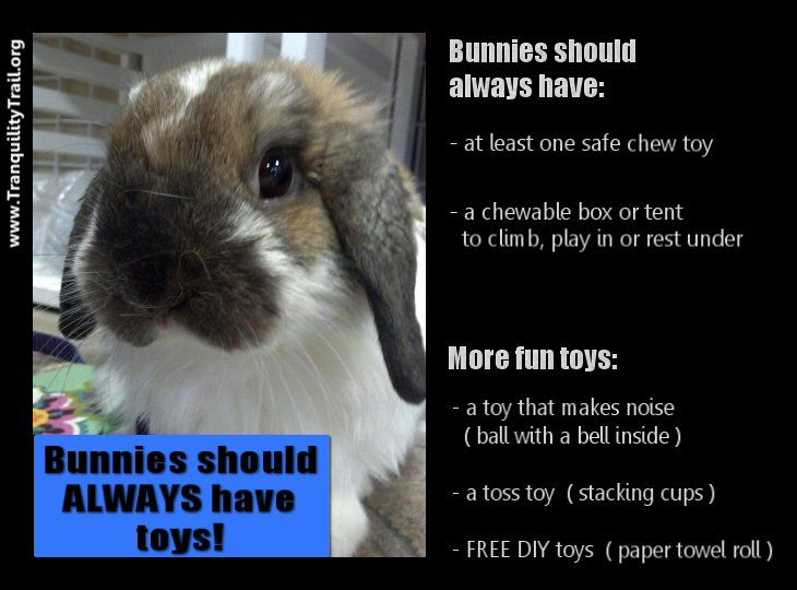 Checklist of toys your pet bunny rabbit should have. I want a bunny again.