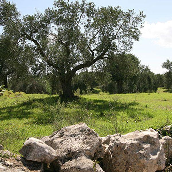 Tour, um die wunderschöne Landschaft von der Küste bis zum Tal von Itria und den UNESCO-Standorten zu bewundern.