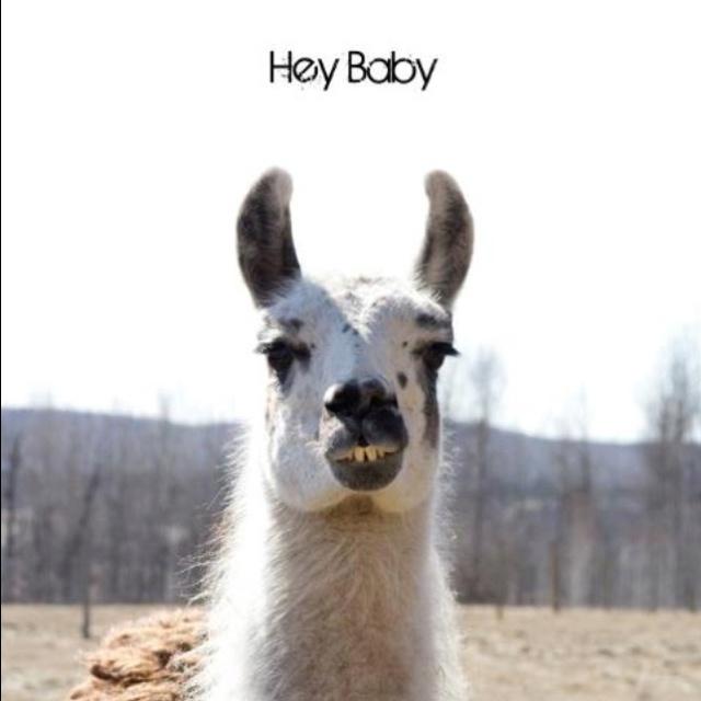 Best 25 Baby Llama Ideas On Pinterest: Best 25+ Llama Pictures Ideas On Pinterest