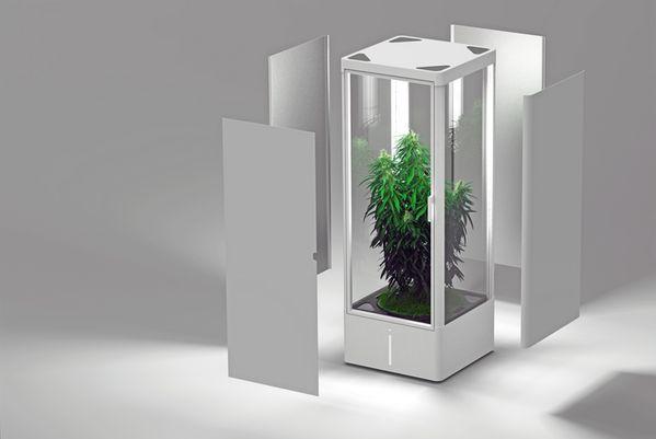Un ex-ingénieur Apple prépare un nouveau produit pour cultiver du cannabis en intérieur