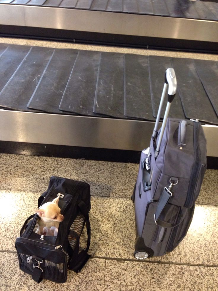 Esperando maleta