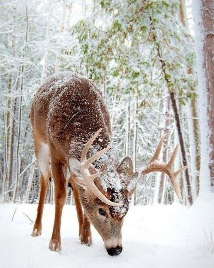 You like deer? . . Follow me:@animals.pov . . Other My Pages @thinking.0ut.l0ud @unique_h0rses @land_of_dogs @our_funny_fr1ends @slavapanco72 @best_places_t0_travel . . #animal #pets #nature #pet #petstagram #cute #instagood #photooftheday #dog #petsagram #adorable #cat #cats #love #dogsofinstagram #puppy #catsofinstagram #dogs #dogstagram #instadog #dogoftheday #catstagram #kitty #ilovemydog #kitten #instacat #doglover #catlover #instagramdogs