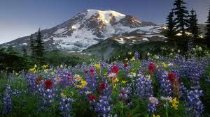 Wildflowers and Mountain
