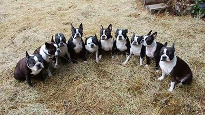 Awesome. How DID you get them all to stay still for a photo?????