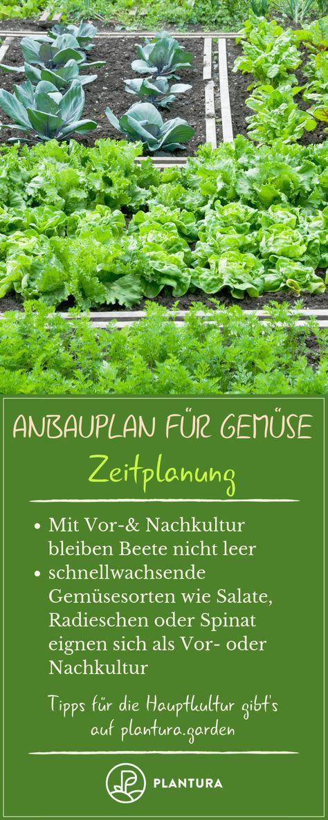 Cultivo de vegetais: um plano de crescimento em 7 etapas   – Garten