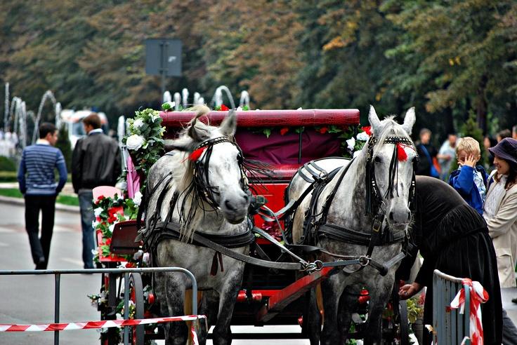 Bucharest, horse drawn carriage
