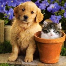 Cats And Dogs Images Cute