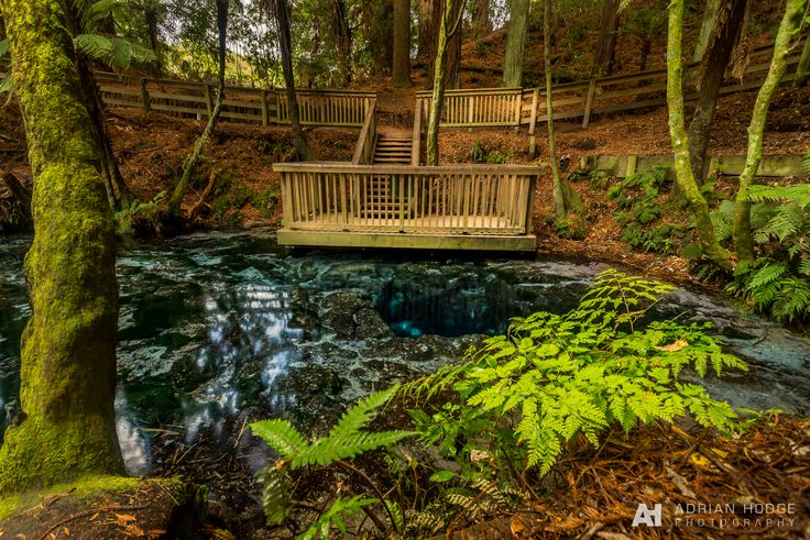 Hangarua Spring at Hamurana Springs © Adrian Hodge