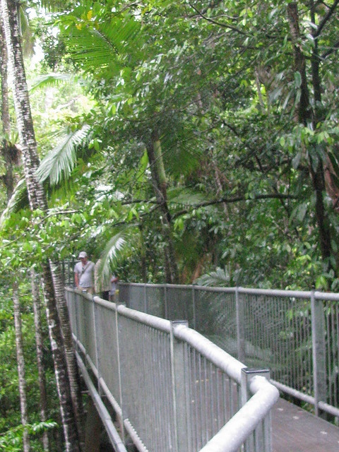 Images from the Daintree Rainforest including visit to the Daintree Discovery Centre