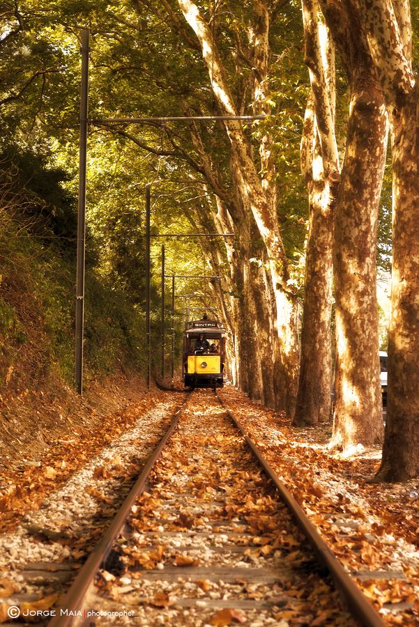 The Autumn Tram - Sintra, Portugal