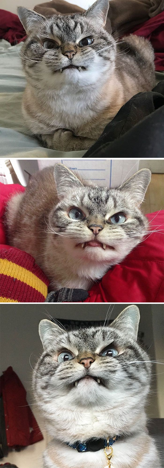10+ Of The Word's Angriest Cats Ever Who Have Had Enough Of Your BS