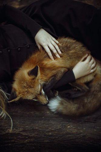 I seriously want a pet fox....no joke.