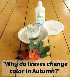 It's that time of year of year again, where the leaves are changing colors day by day. But why does that happen? Find out at home with this experiment!  What You Need: - 3 leaves (from the same tree) - Rubbing Alcohol - Jar - Plastic baggie (or plastic wrap) - Paper Coffee Filter - Small bowl or pan  Click the photo to learn the steps!