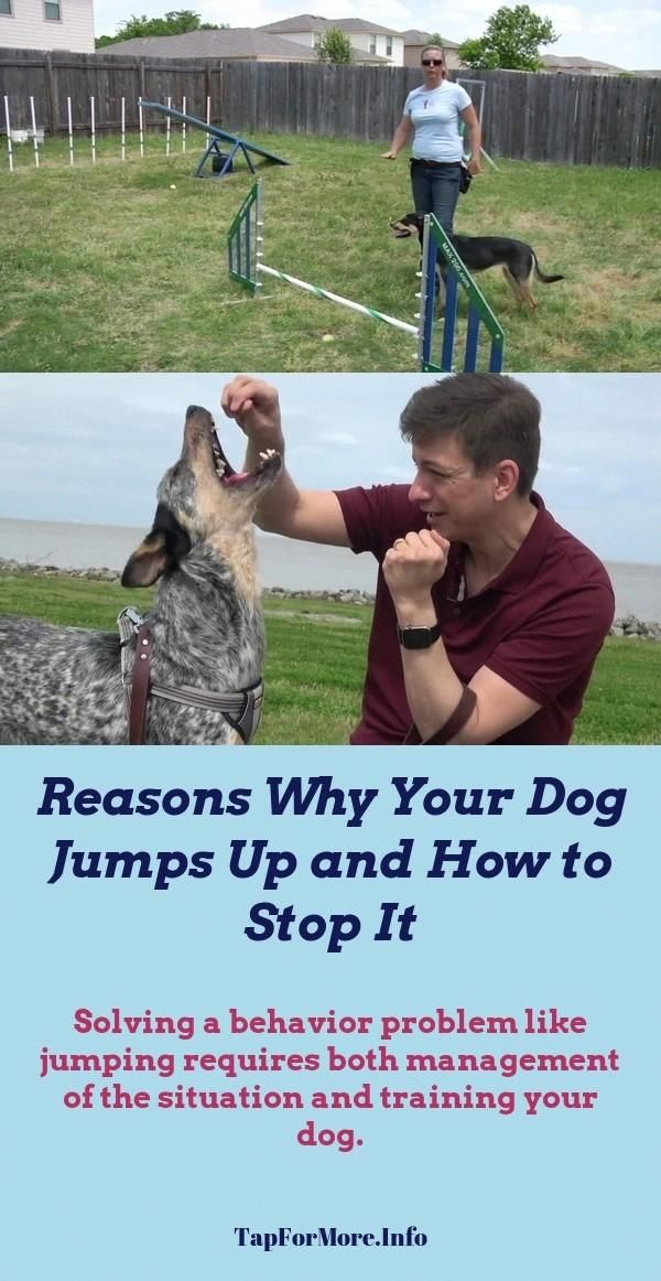 Stop Dog Jumping And Dog Hacks Check The Image For Many Dog