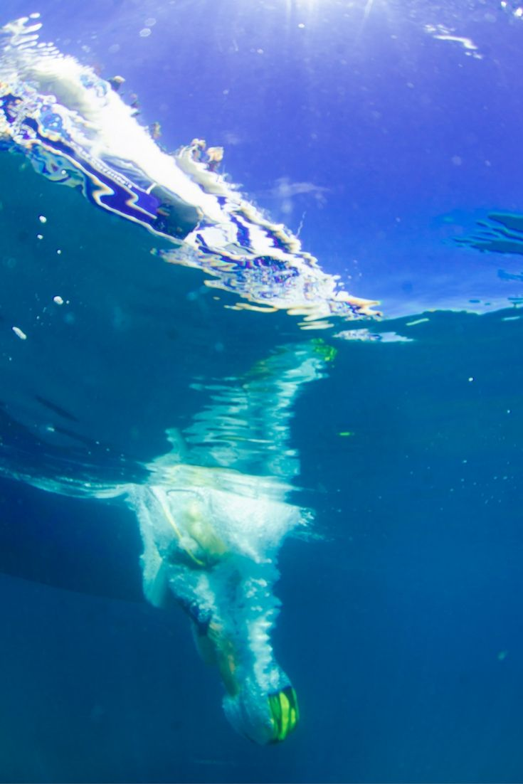Giant stride entries on the #GreatBarrierReef