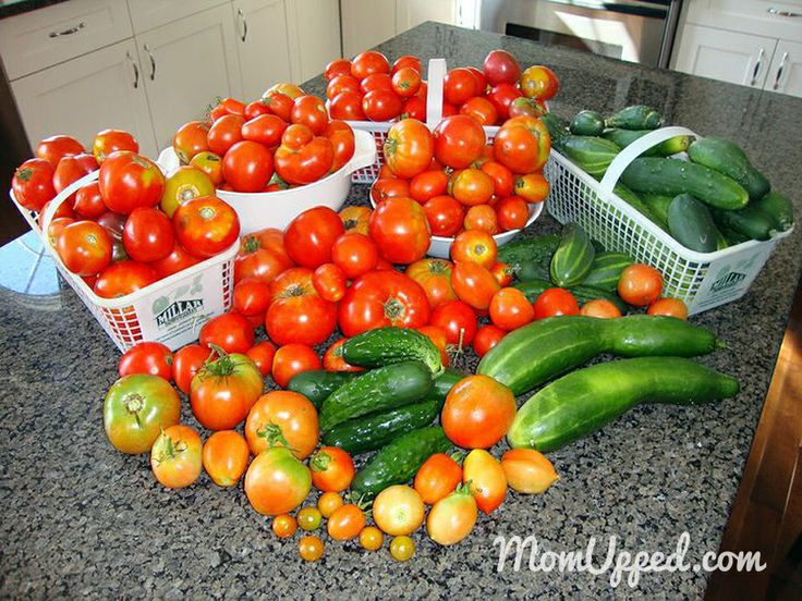 Tomato and cucumber harvest from the home garden.  http://www.momupped.com/growing-veggies.html