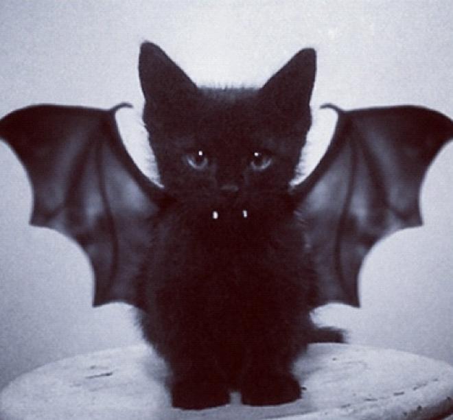 Vampire Bat Cat